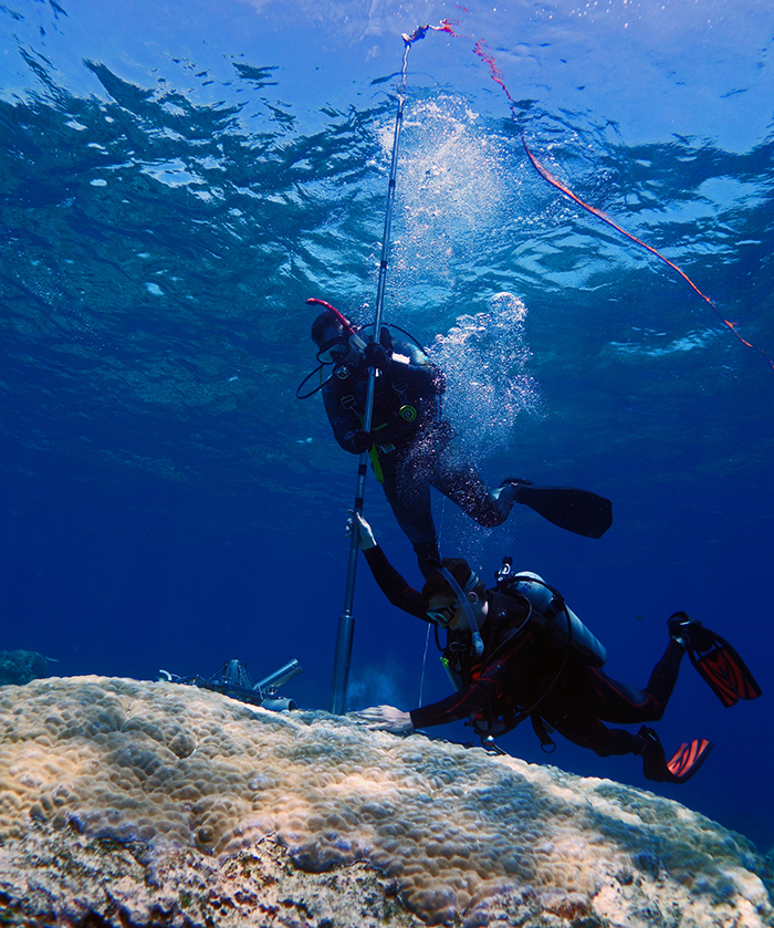 Underwater photograph with two scubba divers insertingg a longg metal rod into a large coral bed